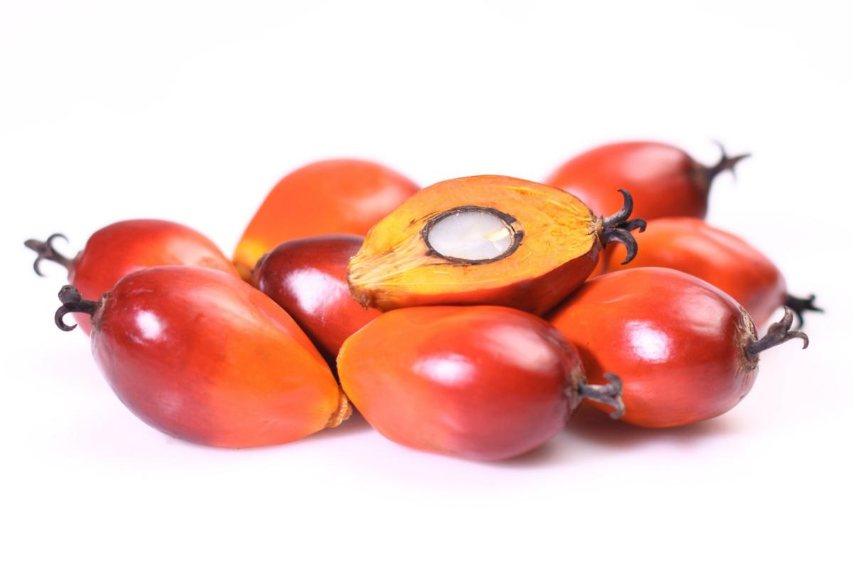 PALM KERNEL (NUT, OIL, CAKE OR SHELL)